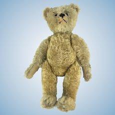 "Antique Steiff Bear 20"" Center Seam ca1908"