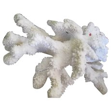 Large Natural White Coral