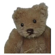 That Face!  Vintage Mini Steiff Heart Breaker Teddy Bear