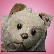 Nice & Early Steiff Spitz Dog Fully Jointed w/ Button & Felt Face
