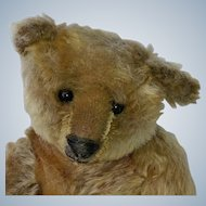 "That Face!  Fabulous 12"" Antique Steiff Blank Button Teddy Bear"