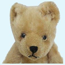 Meet Wilber A Super Cute Vintage 1950's Schuco Yes No Mohair Teddy Bear