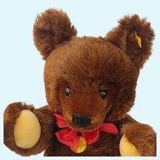 "Gorgeous Big 20"" Vintage Steiff Brown Mohair Original Teddy Bear with All ID's"