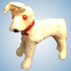 Small Furry Dog