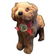 German Fur Dog