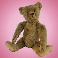 "Steiff Jointed Stuffed 14"" Bear 1908"