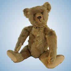 "Steiff Bear 1908 Jointed Stuffed 14"""