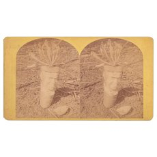 Stereoview of Parsnip Indian Photographed by Stoddard