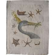 18th Century Hand Colored Engraving of Heron and Starfish