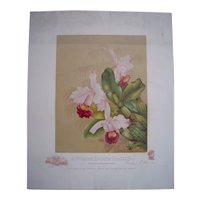 Lithograph White House Orchid by Mrs. Benjamin Harrison