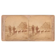 Stereoview Dog Sled in Pacific Northwest