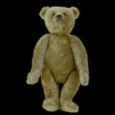 """Rare Steiff 1909 18"""" Margaret Strong Teddy Bear"""