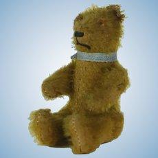 1910's Small German Teddy Bear
