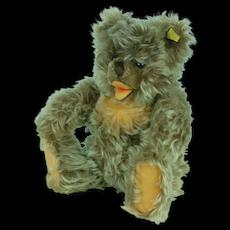 1960's Steiff Zotty Teddy Bear