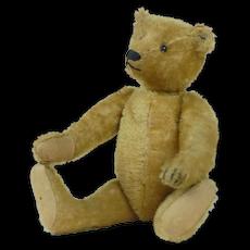 """1910's Early Steiff 12"""" Teddy Bear w/ Short Mohair"""