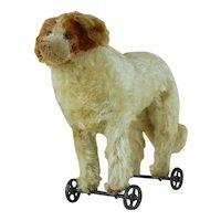 Early 1910's Steiff St. Bernard Pull Toy w/ Metal Wheels