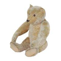 12 inch 1908 Early Steiff Bear w/Blank Button
