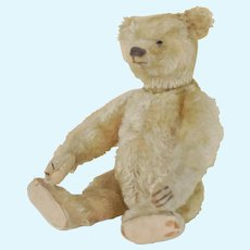 "12"" Early 1908 Steiff Teddy Bear w/o Button"