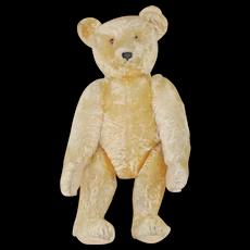 Gorgeous 1920's 24 inch Golden Steiff teddy bear with ff button