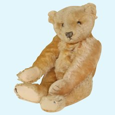 Gorgeous  16 Inch 1906 Apricot Colored 5 Claw Steiff Teddy Bear Button in Ear