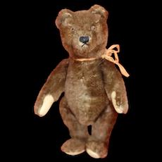Chocolate Brown 1950s Steiff Teddy Bear Unusual 8 inch size