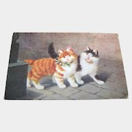 Charming Kitty Cat Postcard  Carte Postale Poskarte