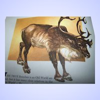 Wild Animals of The World Garden City Books C. 1948