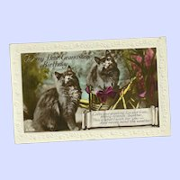 Tinted Real Photograph Post Card Charming Kitty Cats  Grandson Birthday