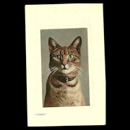 "Real Glossy Photograph Post Card Postcard "" Tommy ""  Cat Portrait  Valentine's Series Great Britain"