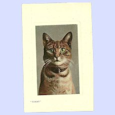 """Real Glossy Photograph Post Card Postcard """" Tommy """"  Cat Portrait  Valentine's Series Great Britain"""
