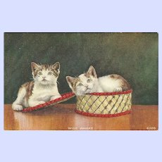 """Oh What A Lovely Vintage Kitten Post Card Post Card """" Wide Awake """""""
