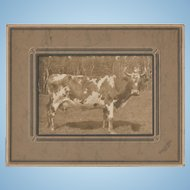 Vintage Sepia Cabinet  Card Featuring a Big Old COW  Ernest Roby Truro N.S.