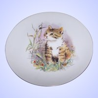 Such A Sweet Tabby Kitty Cat Porcelain Plate Artist Signed John Evans