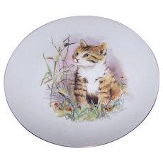 Such A Sweet Tabby Kitty Cat Porcelain Plate Artst Signed John Evans