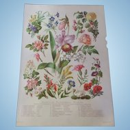 "Familiar Flowering Plants Chromo Lithograph Print 1900  12"" x 8. 1/2"""