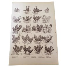"""Types of Fowl Hens Chickens etc. Engraved Pint 1900 12"""" x 8. 1/2"""""""