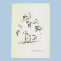 """Lucy Kemp-Welch 'Forest Ponies' study in lead Pencil Print 1895.  11"""" x 7. 3/4"""""""