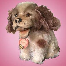 Loved Wee Steiff Cockie Pup
