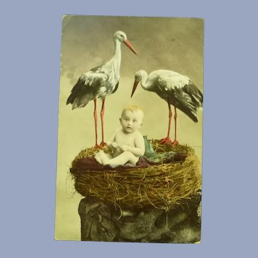 Vintage Real photo French Postcard of Baby in Nest with Storks