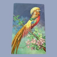 Lovely Vintage German Postcard of a Beautiful Bird in Plumage