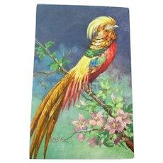 Lovely Vintage German Postcard of a Beautiful Bird in Plumage