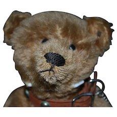 "12"" Steiff Teddy Bear Fabulous Face in Mint Condition"