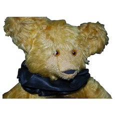 "16"" English Teddy Bear With Amazing Face"