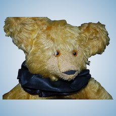 """16"""" English Teddy Bear With Amazing Face"""