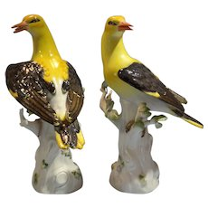 Pair of Meissen Porcelain German Golden Oriole/Yellow Birds Upon Tree-Branch Late 19th Century