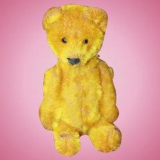 Yes No Golden Schuco Bear