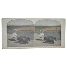 Antique Stereoscope Card Child Driving Wagon With Pigs