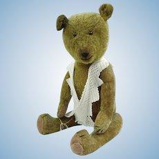 American stick bear 1912-20