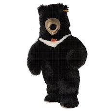 Steiff Kragenbar Standing Black Bear c.1990s