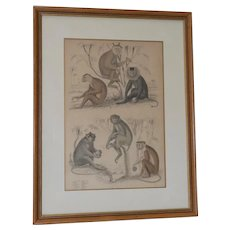 Whimsical Mid 19th Century Engraving with Monkeys by S. Milne